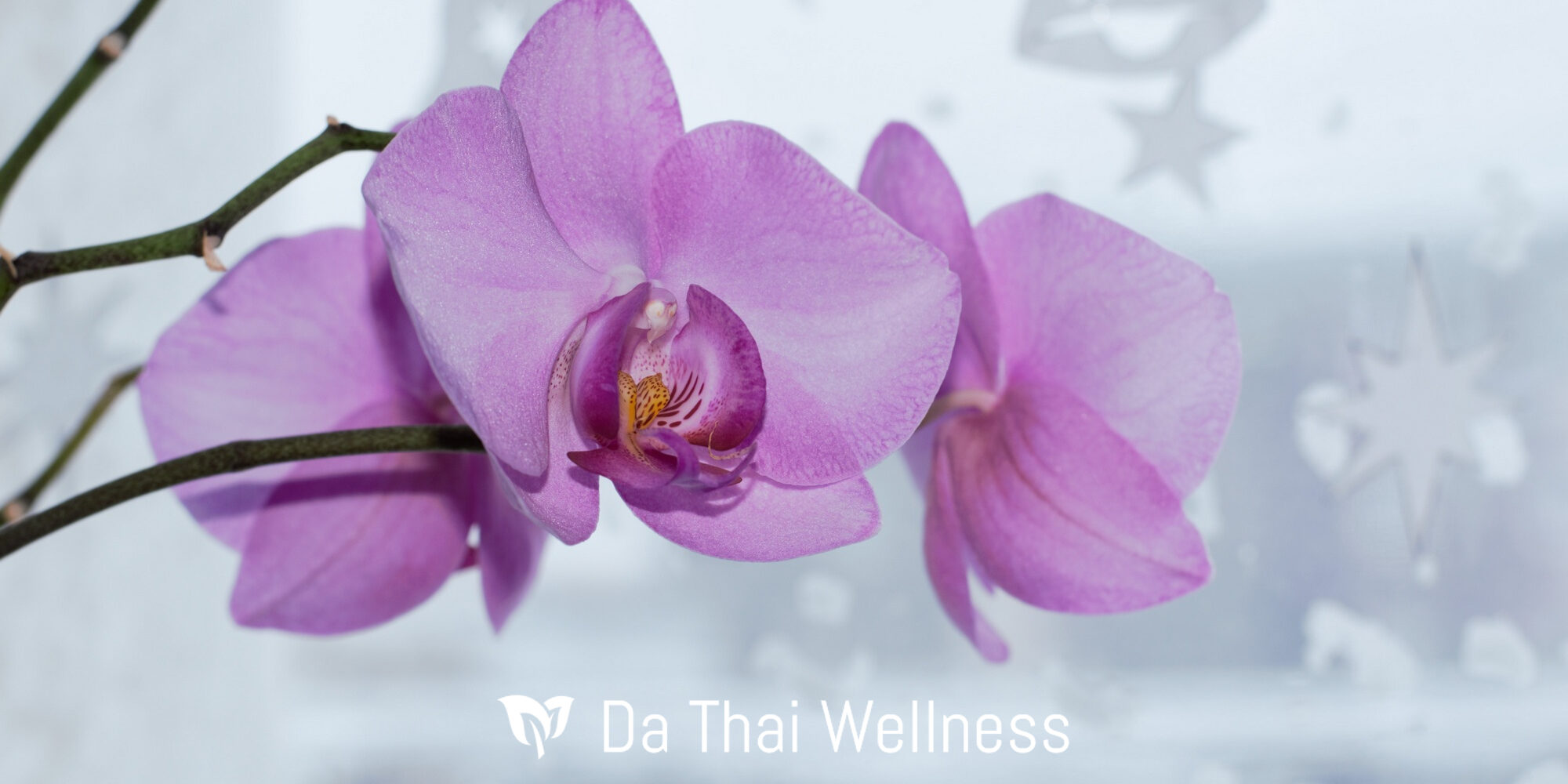 orchid thai massage tantrisk massage jylland